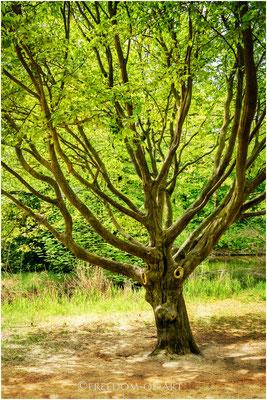 Mein kleiner Baum  -  My Little Tree