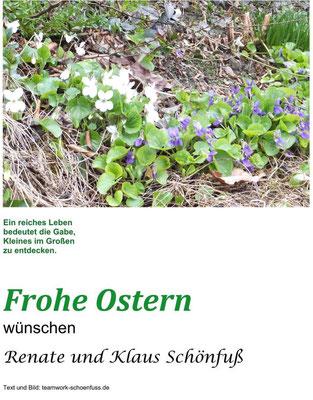 Weiße und blaue Veilchen am Silberberg Radeberg, Ostern 2020. Foto: ©Klaus Schönfuß