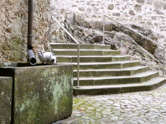 """Treppe zum südlichen Zugang Haupt- und Vorburg. Monolithischer Sandstein-Trog als Zisterne, die """"Haus- und Hof-Katze"""" ist überall dabei."""