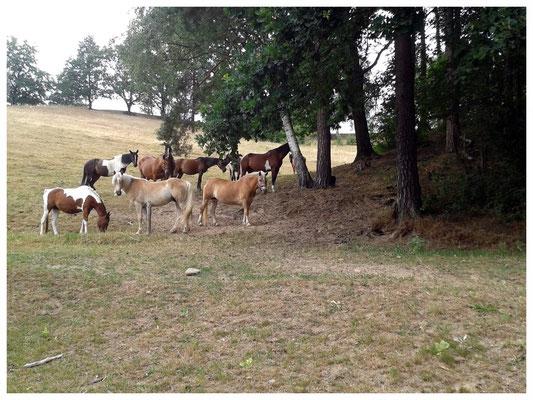 Lotzdorfer Flur bei Liegau, Hänge zum Silberberg, Pferdesport in Liegau 1