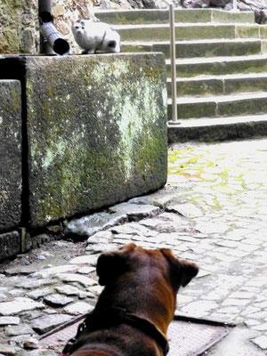 """Die """"Schlosskatze vom Klippenstein"""" - immer dabei, aber skeptisch"""