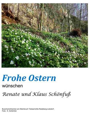 Tobiasmühle Radeberg, Buschwindröschen am Steinbruch, Ostern. Foto: ©Klaus Schönfuß