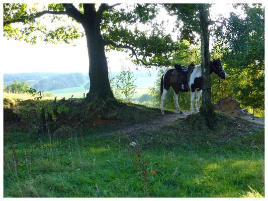 Lotzdorfer Flur bei Liegau, Hänge zum Silberberg, Pferdesport in Liegau 2