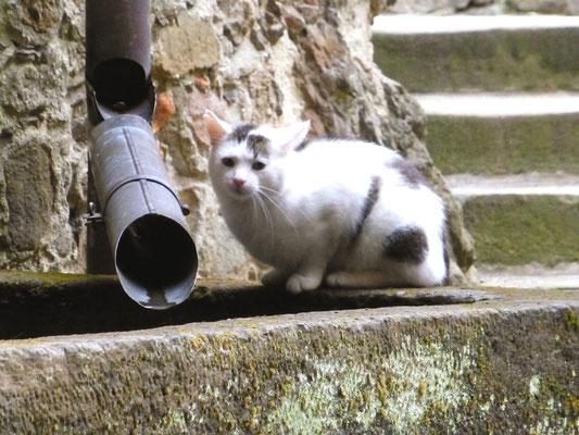 """Monolithischer Sandstein-Trog als Zisterne, die """"Haus- und Hof-Katze"""" ist überall dabei."""