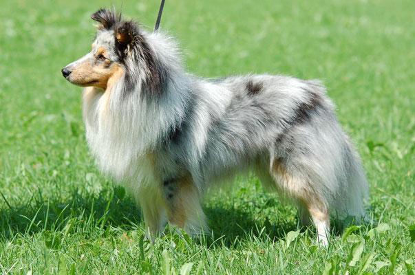 ein wunderschöner Junghund