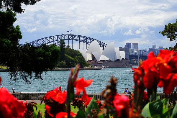 Blick auf die Oper & Harbour Bridge