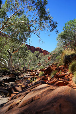 Kings Creek Walkim Kings Canyon