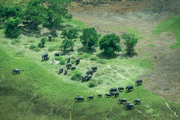Bild aus dem Flugzeug - Okawangodelta