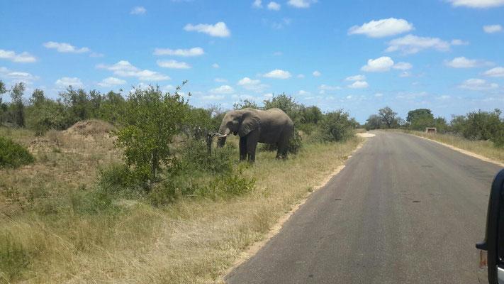 Elefant hat soeben die Strasse überquert