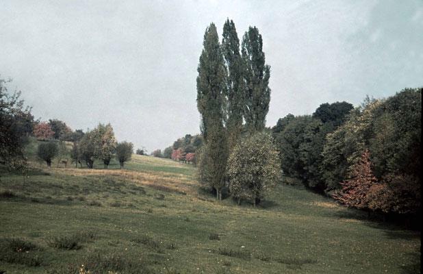 Herbst auf den Berger Wiesen ca. 1939/40 (Stadtarchiv, Nachlass Muhl)