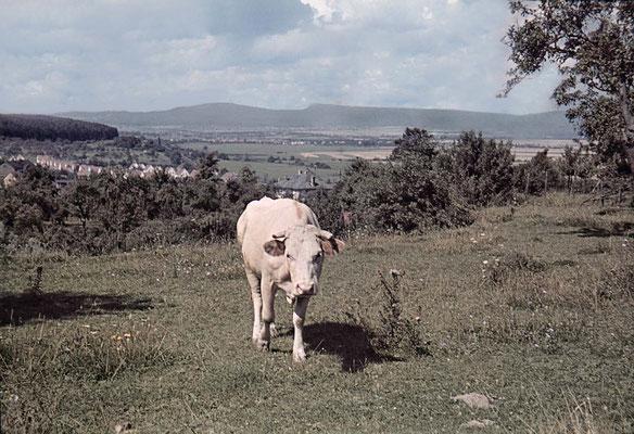 Blick vom Niederberg zum Russland, links Siedlung am Höhenweg, ca. 1940 (Nachlass Muhl) - Bearbeitung Wolfram Dietz