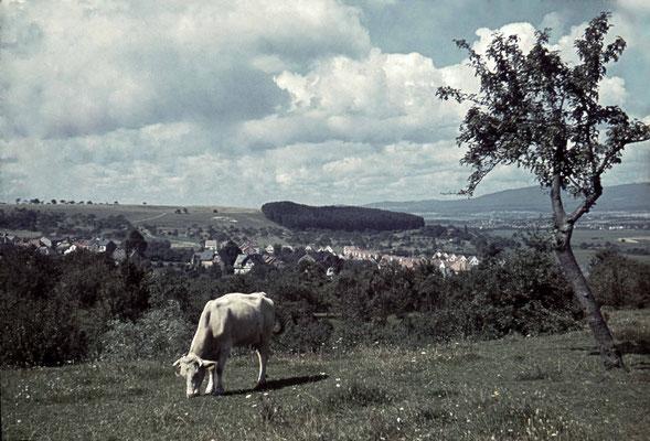 Blick vom Niederberg auf das Russland-Gelände und das Russenwäldchen, im Vordergrund die Siedlungshäuschen Hollerweg/ Höhenweg.