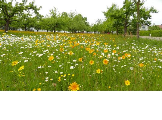 Blumenvielfalt auf der Obstwiese