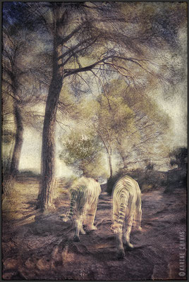 Les tigres de la garrique