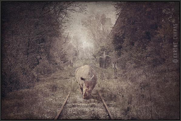 Le rhino cheminot