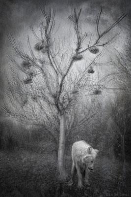 L'arbre à pierre