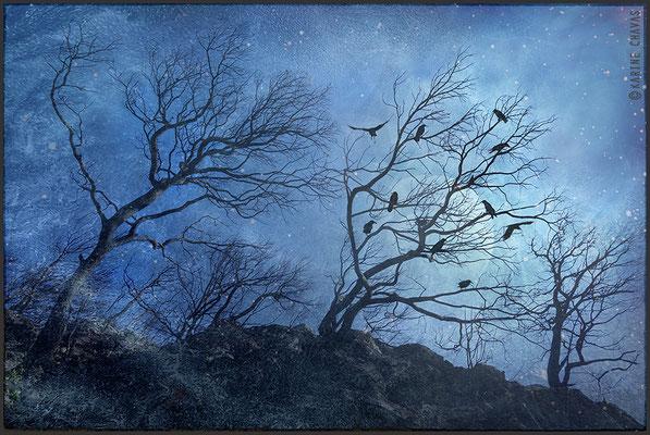 L'arbre à lune