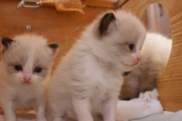 Mädchen & Baby orange