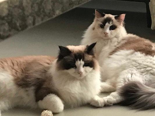 Jägi und Stella