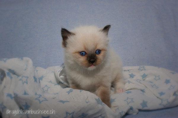 Baby blau