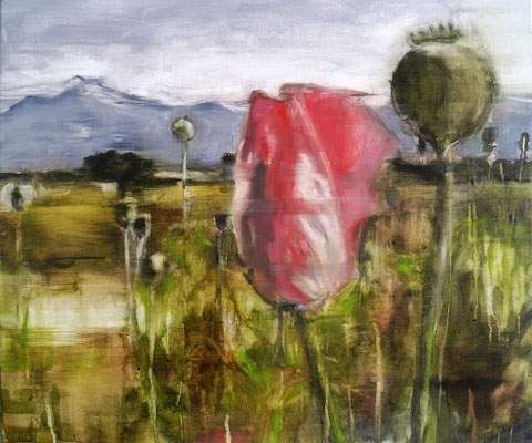 Poppies 2 50x60 Oil/Canvas 2014