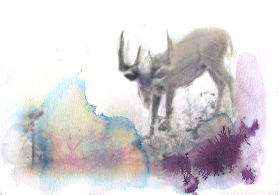 Horned 21x30 cm Ink/Paper 2014