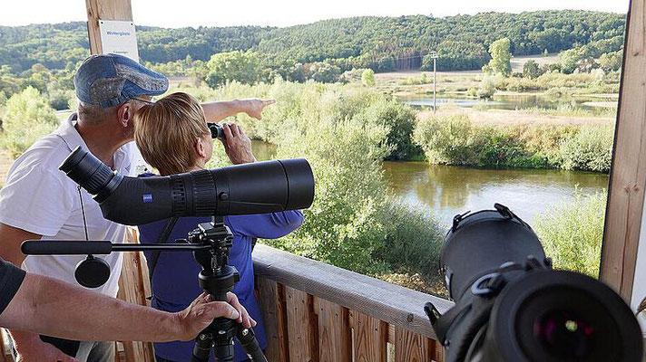 Vogelbeobachtung am Turm