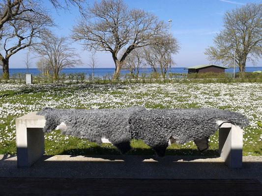 Frühling auf Gotland,irrlichtjaeger