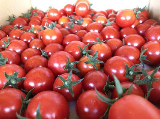GP野菜 ミニトマト