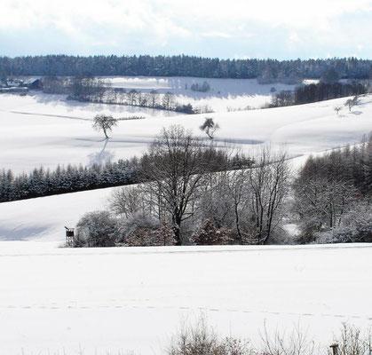 Winterlandschaft mit schneebedeckten Feldern