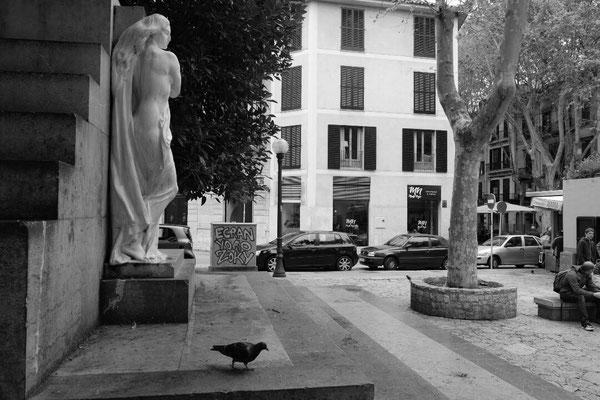 Dove in Palma