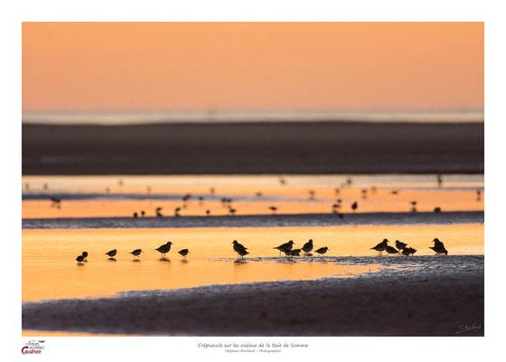 La Baie de Somme est le paradis des oiseaux migrateurs