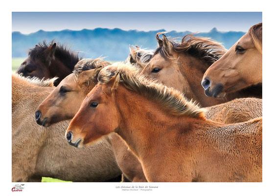 des chevaux Henson