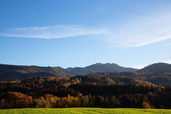 Herbstwald vor der Kampenwand