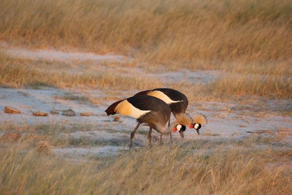 Hwange Nationalpark in Simbabwe