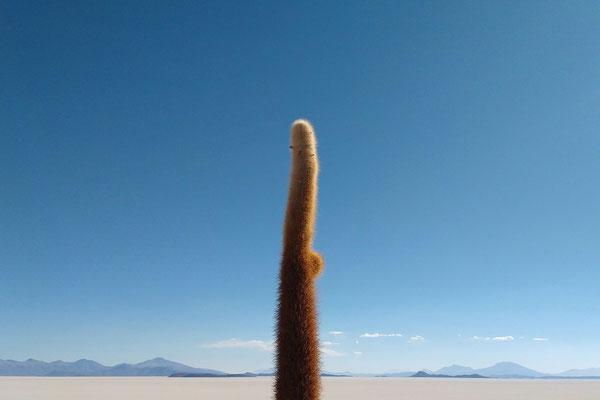 Blick von Incahuasi Insel Bolivien