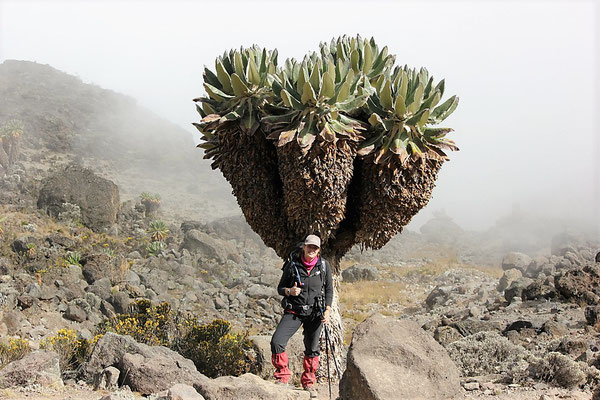 Best Kilimanjaro Company