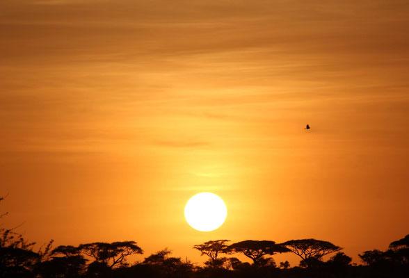 Sonnenuntergang Serengeti