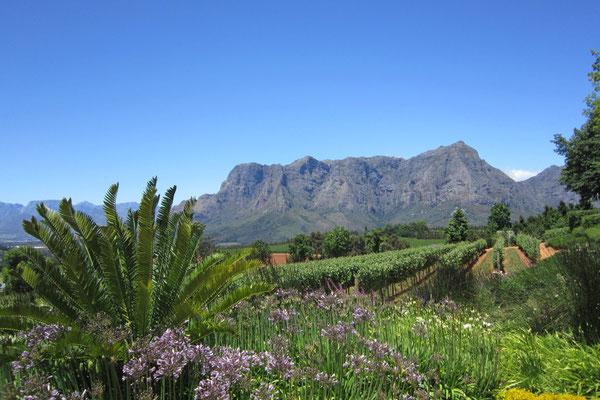 Weinberge rund um Stellenbosch
