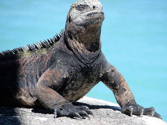 Galapagos Inseln Reisen