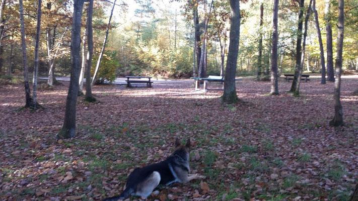 espace détente en forêt