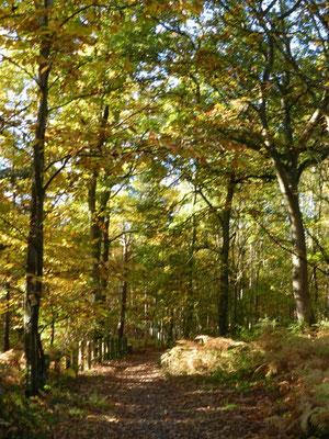 forêt de conches en ouche