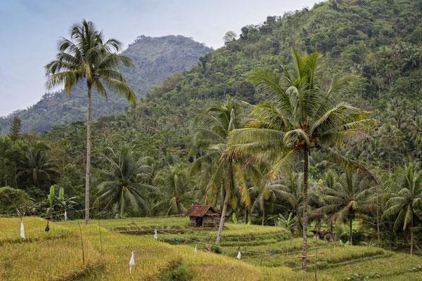 Javanesische Landschaft