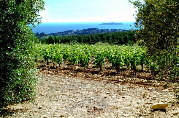 Le vignoble de l'AOC Bandol