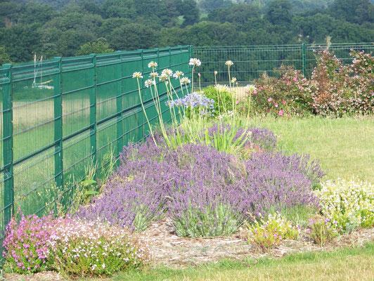 clôture verte