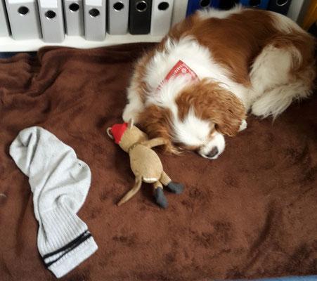 Charly auf Rocky's Bürodecke