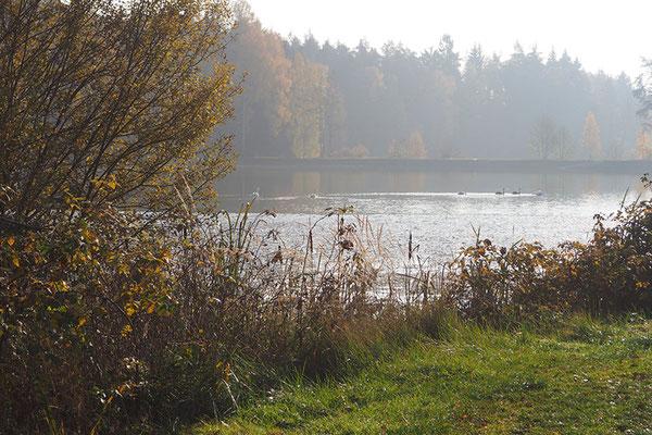 Teich vom Fischhof Bächer