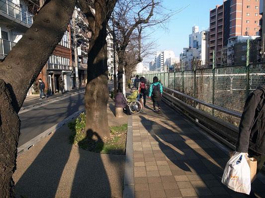 再び線路に沿って桜並木を歩く。