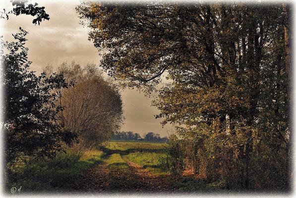 Der Zauber eines Herbstweges