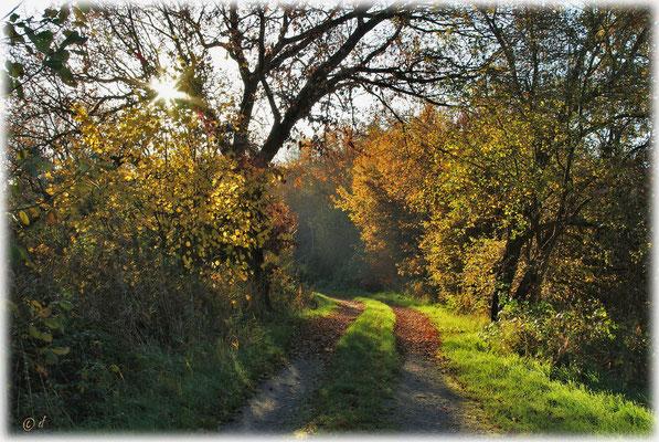 Stille Herbstmomente